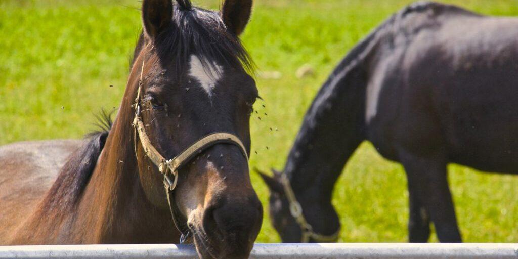 pferde-haulage-pferdepension